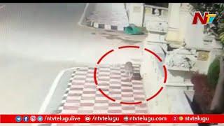 Leopard caught on camera at Tirumala, CCTV footage..