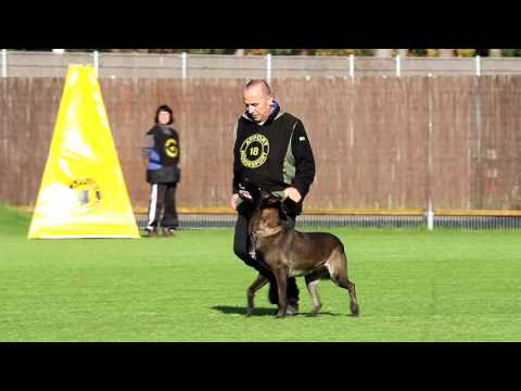 NIK 2016 Erik Köpp Loco van de Berlex Hoeve Obedience 80 P