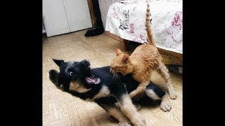 Animals Are Mean Sometimes 3