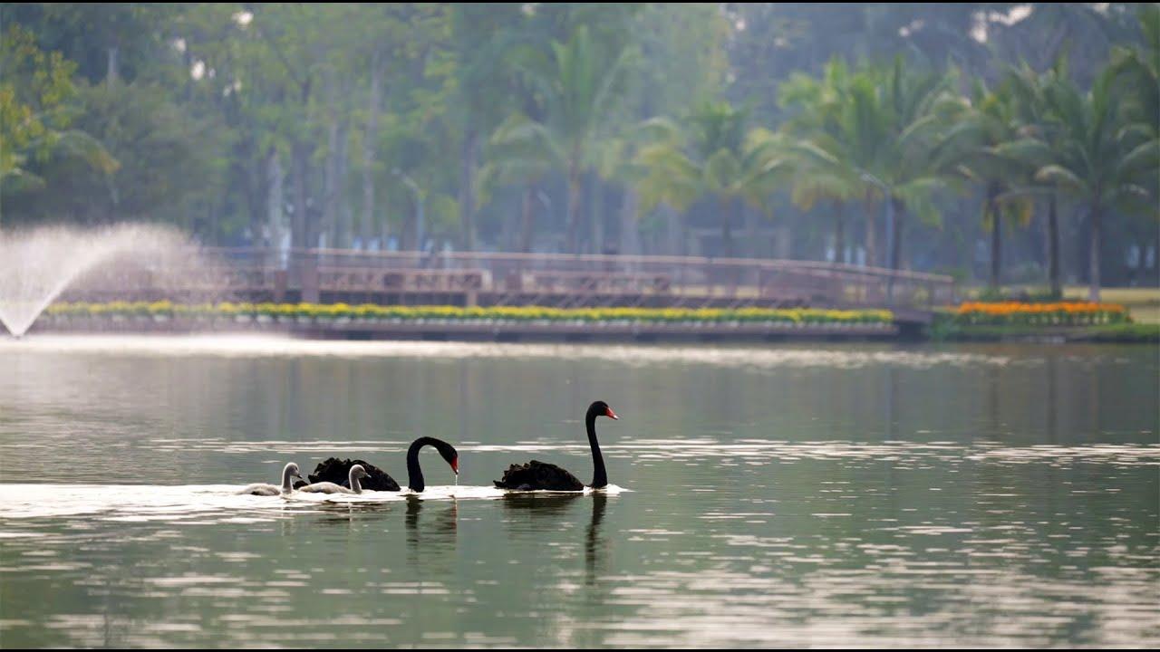 Trực tiếp chủ đầu tư Ecopark - Cho thuê căn hộ chung cư AquaBay, WestBay, Rừng Cọ video