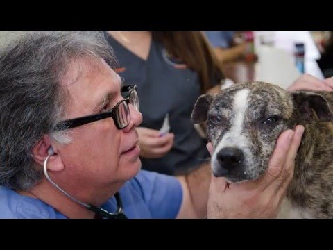 Banfield Pet Hospital Helps Pets in Puerto Rico
