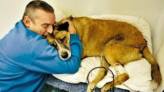 Owners Say Goodbye To Their Dying Dog Compilation|| Funny Everyday Compilation