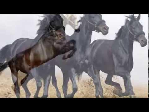 Naturalmente Paco - Karen Souza-Wild Horses.