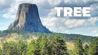 How BIG Were TREES ? | The Biggest Trees in the World