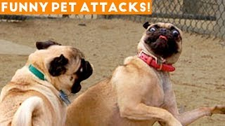 Funniest Animal Attacks Compilation March 2018| Funny Pet Videos