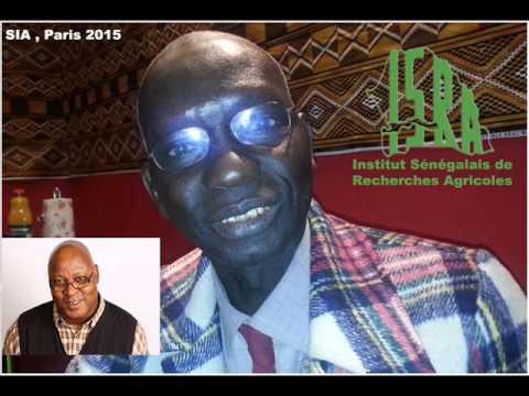 Cheikh Tidiane Diop, responsable de la Formation et chef de l'Unité d'information et de valorisation des résultats de la recherche de l'institut sénégalais de recherches agricoles.  RFI/Sayouba Traoré