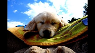 Relax With Puppies! 1 Hour Of Relaxing Guitar & Puppies | Lift Your Mood And Feel Great!