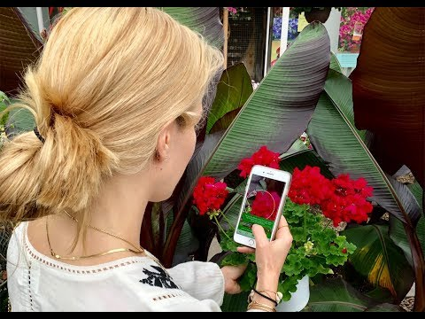 PlantSnap 3.0 Instructional Video -- iOS Landscape