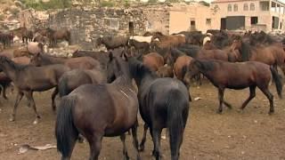 hürmetçi köyü yılkı atları kayseri