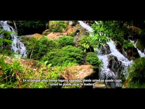 Un bosque de oportunidades en Panamá - versión corta