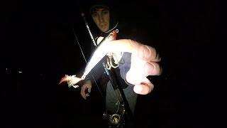 Night Stripers Love the Subwalk X-Rap. Spring Striper Fishing