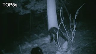 5 Most Compelling Pieces Of Bigfoot Evidence