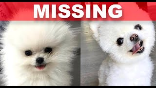 "The TRUTH about THE LABRANT FAMILY'S LOST DOG ""CARL"""