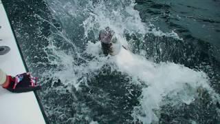 Trinidad Trailer