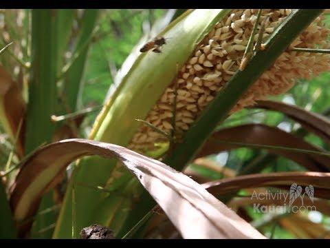 Kauai Chocolate Tour - Steelgrass Farm