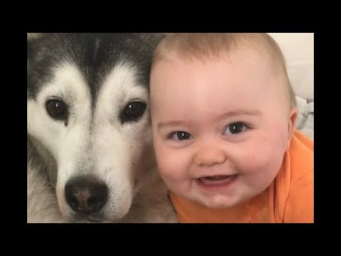 If this doesn't make you smile nothing will!!! Baby Parker and Millie the husky are best friends!