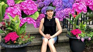 Dạo Quanh Vườn Hoa Trước Nhà Xem Hoa Cẩm Tú Cầu Nở Rộ Tuyệt Đẹp 🇨🇦332》 Beautiful Hydrangea Flowers