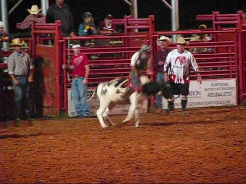 Jr Rodeo Calf Steer And Bullriding Youtube