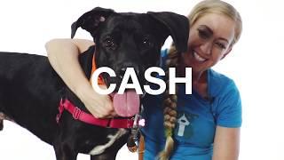 Adopt Cash at NKLA
