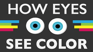 How Do Your Eyes See Color?