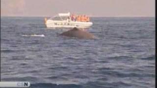 Éxito del avistamiento de ballenas