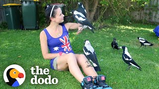 Woman Gives Toys to a Wild Magpie — and He Invites His Friends Over to Play | The Dodo Wild Hearts