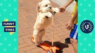 TRY NOT TO LAUGH - FUNNY ANIMALS   Funny Videos March 2019