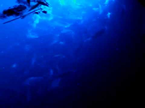 LED under water light attracts fish