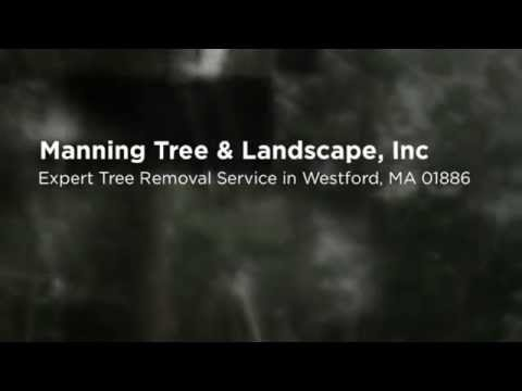 Westford, MA Tree Removal Pruning 01886