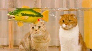 고양이와 낚시를 했다! 배스가 잡혔다!