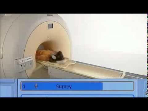 Investigaciones Médicas - Resonancia Magnética de Columna ...