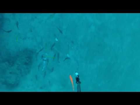 Underwater Reds