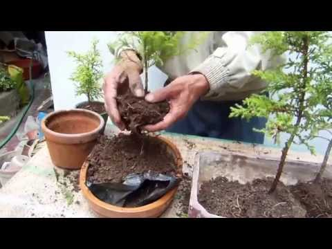 bonsai schale selber herstellen aus beton rindenmulch bonsai pot itself produce concrete screed. Black Bedroom Furniture Sets. Home Design Ideas