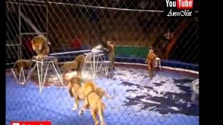 Top 10 Circus Accident