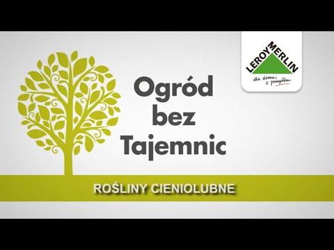 Rośliny cieniolubne