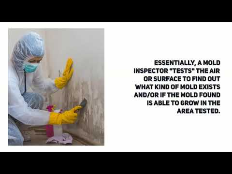 How mold testing is done?