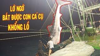 Lớ Ngớ Bắt Được Con Cá Mập Cụ Khổng Lồ nặng 3000kg & Nhiều Cá Ngừ/ Catch The Giant Shark | #24