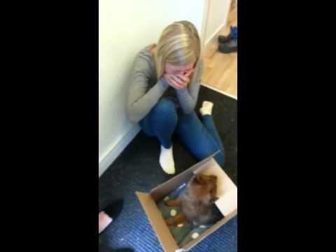 Puppy surprise 2015!