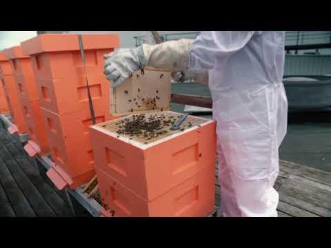 300 000 bin på Stockholmsmässans tak