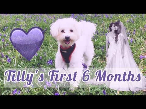 Our Puppy's First Six Months [CC]