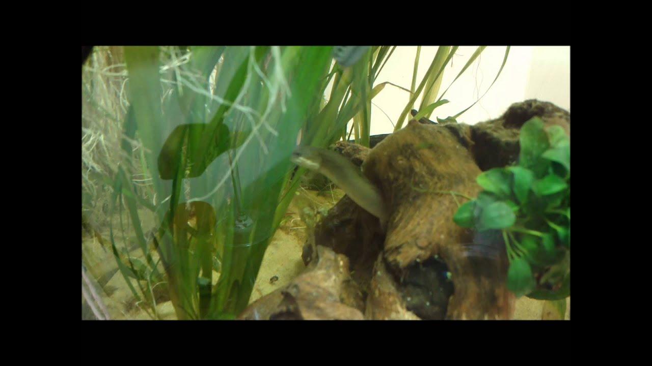 Dinosaur eel - photo#49