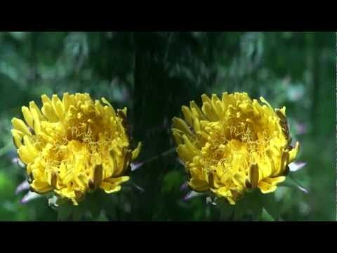 改、NEX Eマウント交換レンズSummicron Side-by-side ワンレンズ 3D