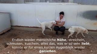 Video von YouTube anschauen