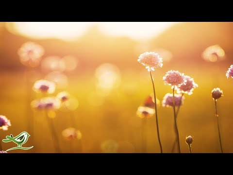 Relaxing Piano Music: Beautiful Sad Music, Soothing Music, Romantic Music, Stress Relief ★95