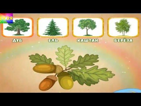 Учим названия деревьев