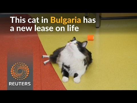 Fitted with bionic feet, a Bulgarian cat seeks a new home