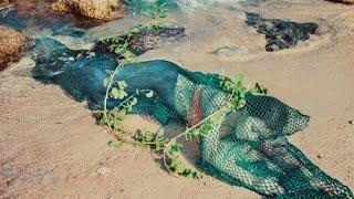 """Sự thật về """"Nàng tiên cá"""" bị mắc lưới ở Quảng Nam"""