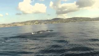 SUP with a humpback whale, dolphins and sea lions