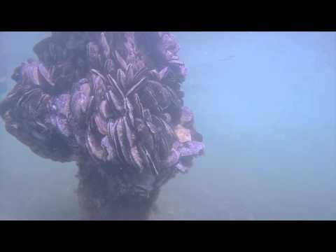 Underwater Truth: A dive in Miami Marine Stadium Basin