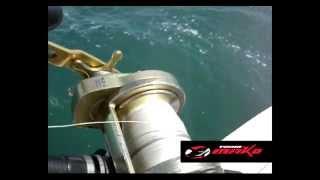 Pesca de tiburones